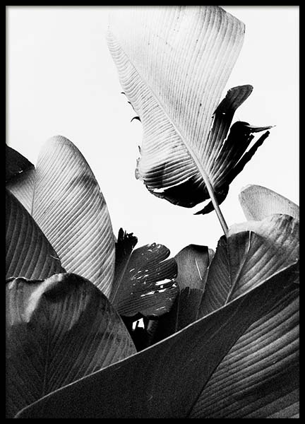 B&W Banana Leaves No2 Poster in the group Prints / Floral at Desenio AB (10064)