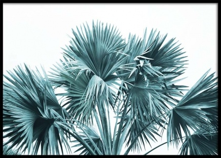 Bismarck Palm No3 Poster in the group Prints / Floral at Desenio AB (10130)
