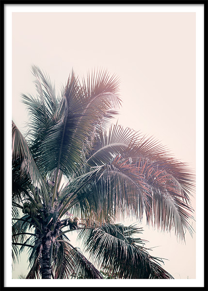 A Palm Tree Dream Poster in the group Prints / Nature at Desenio AB (10169)