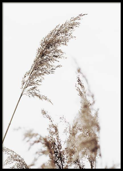 Grass Poster in the group Prints / Floral at Desenio AB (10180)