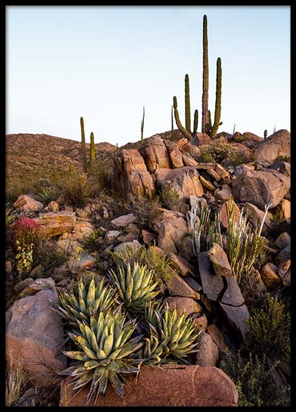 Baja Desert Poster in the group Prints / Nature at Desenio AB (10225)