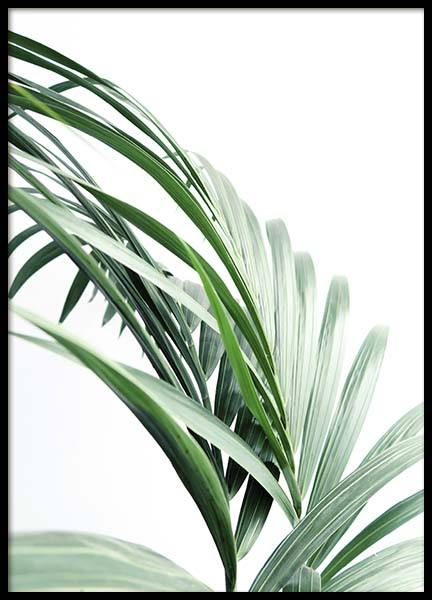 Palm Tree Leaves Close Up Poster in the group Prints / Floral at Desenio AB (10244)