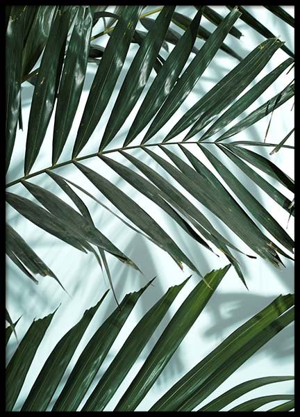 Palm Leaves Shadow No2 Poster in the group Prints / Floral at Desenio AB (10285)