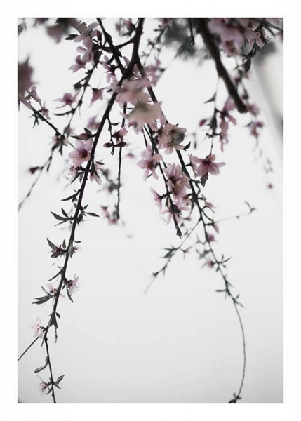 Cherry Branches No. 1 Poster in the group Prints / Photographs at Desenio AB (10329)