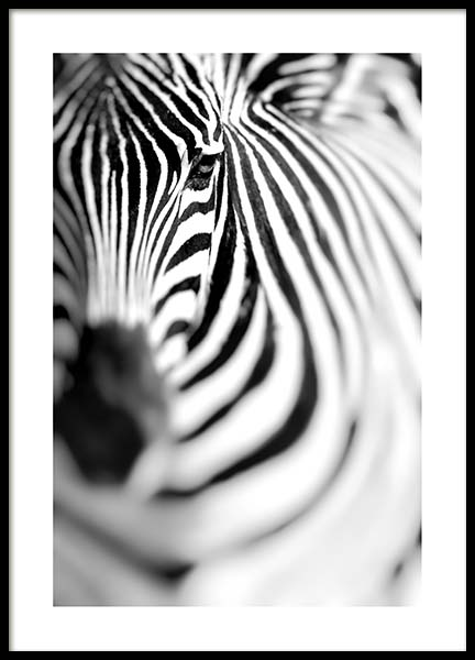 Zebra Portrait Poster in the group Prints / Black & white at Desenio AB (10400)