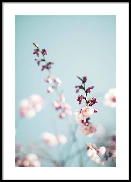 Cherry Blossom No2 Poster in the group Prints / Photographs at Desenio AB (10427)
