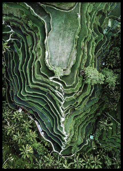 Rice Terraces Poster in the group Prints / Nature at Desenio AB (10443)