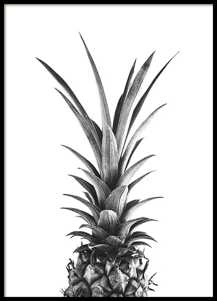 Pineapple B&W Poster in the group Prints / Photographs at Desenio AB (10658)