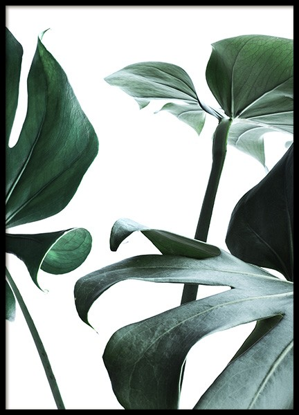 Big Monstera No.3 Poster in the group Prints / Photographs at Desenio AB (10738)
