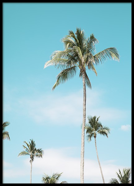 Miami Beach Palms Poster in the group Prints / Nature at Desenio AB (10764)