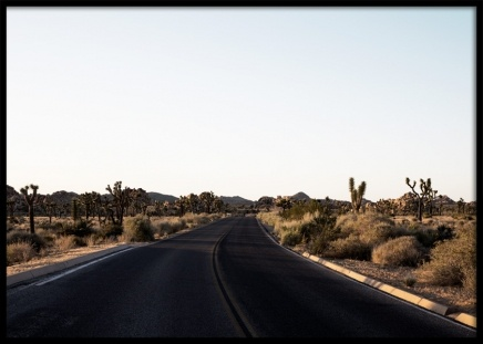 "Joshua Tree Road Poster in the group Prints / Sizes / 50x70cm | 19 	¾ x 27 ½"" at Desenio AB (10799)"