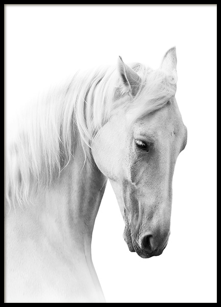 Horse Profile Poster in the group Prints / Black & white at Desenio AB (10876)