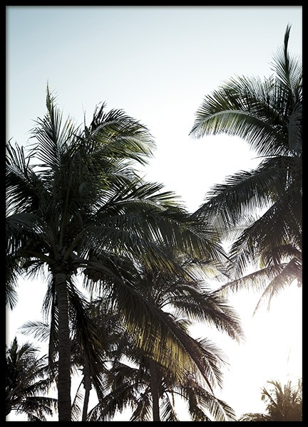 Palms & Sunlight Poster in the group Prints / Nature / Tropical at Desenio AB (10961)