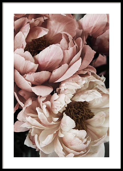 Coral Sunset Peony Poster in the group Prints / Floral at Desenio AB (10988)