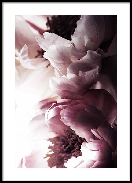 Dreamy Peony No2 Poster in the group Prints / Sizes / 50x70cm | 20x28 at Desenio AB (11776)