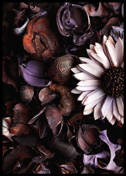 Dried Flowers Poster in the group Prints / Floral at Desenio AB (11784)