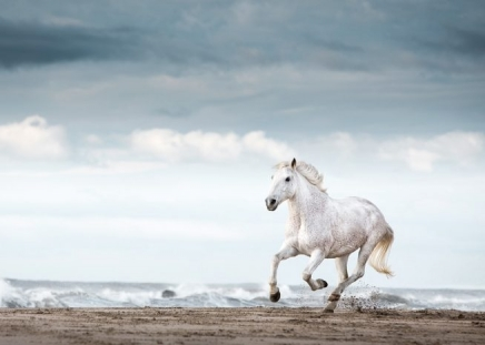 Running White Horse Poster in the group Prints / Animals at Desenio AB (11849)