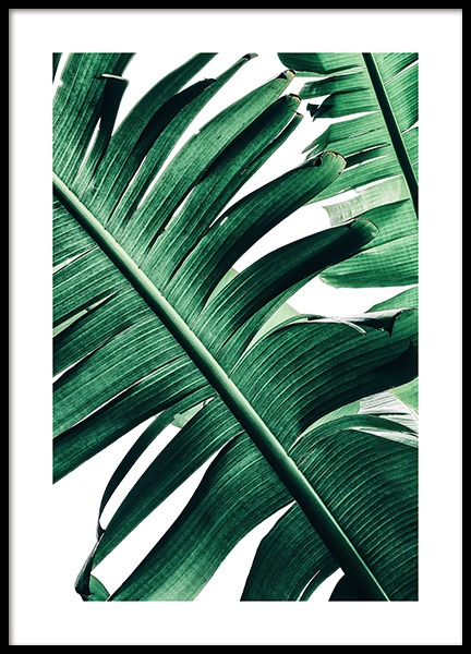 Banana Palm Leaves No2 Poster in the group Prints / Photographs at Desenio AB (12053)