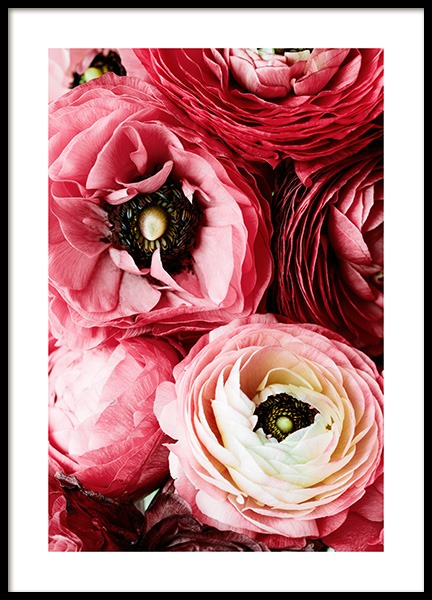 Bouquet of Pink Ranunculus Poster in the group Prints / Floral at Desenio AB (12108)