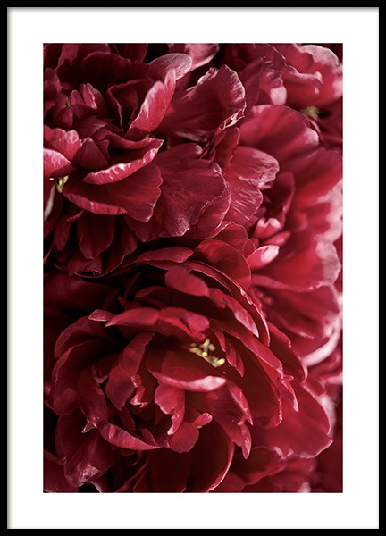 Burgundy Roses Poster in the group Prints / Floral at Desenio AB (12109)