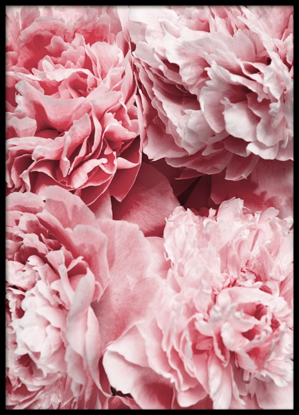 Peony Flowers Poster in the group Prints / Floral at Desenio AB (12110)