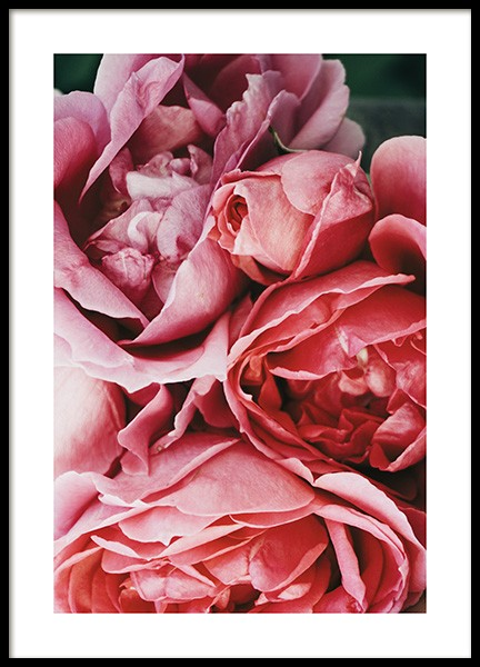 Rose Flowers Poster in the group Prints / Floral at Desenio AB (12113)