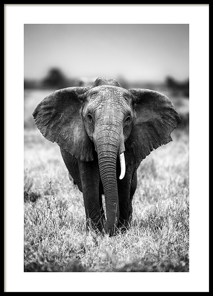 Elephant on the Savanna Poster in the group Prints / Black & white at Desenio AB (12301)