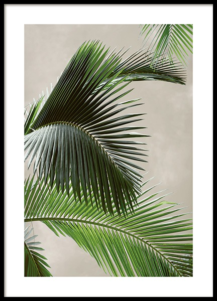 Tropical Palm Poster in the group Prints / Photographs at Desenio AB (12570)