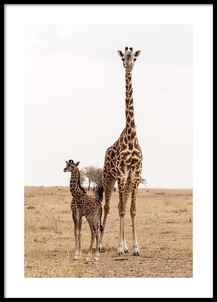 Mother and Baby Giraffe Poster in the group Prints / Photographs at Desenio AB (12578)