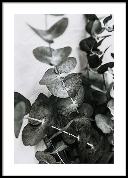 Eucalyptus Bouquet No1 Poster in the group Prints / Floral at Desenio AB (12581)