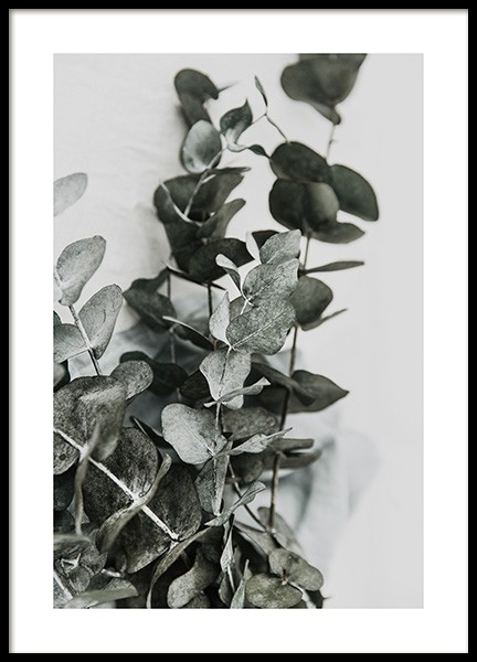 Eucalyptus Bouquet No2 Poster in the group Prints / Floral at Desenio AB (12582)