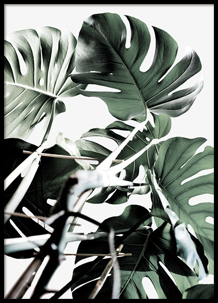 Monstera Cluster Poster in the group Prints / Floral at Desenio AB (12583)