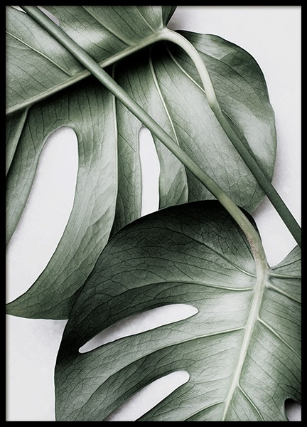 Monstera Pair Poster in the group Prints / Photographs at Desenio AB (12584)