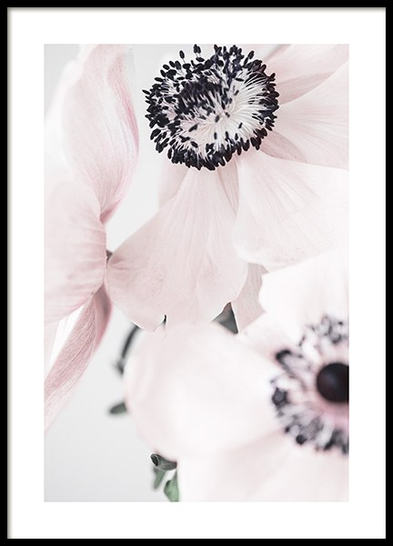 Blushing Anemone Poster in the group Prints / Floral at Desenio AB (12655)