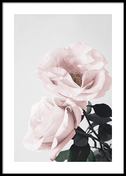 Blooming Roses Poster in the group Prints / Floral at Desenio AB (12656)