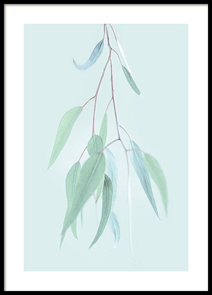 Ghost Gum Leaves Poster in the group Prints / Photographs at Desenio AB (12843)