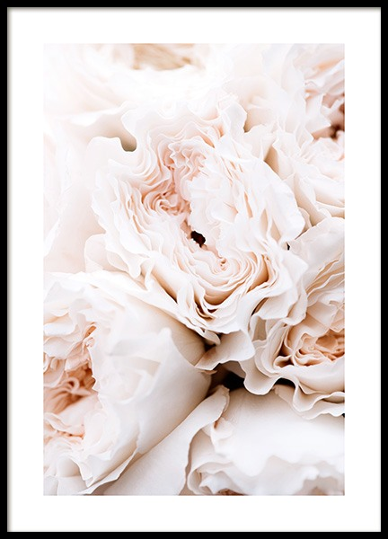 Blossoming Roses Poster in the group Prints / Photographs at Desenio AB (12995)