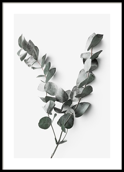 Eucalyptus Twigs No2 Poster in the group Prints / Photographs at Desenio AB (13011)