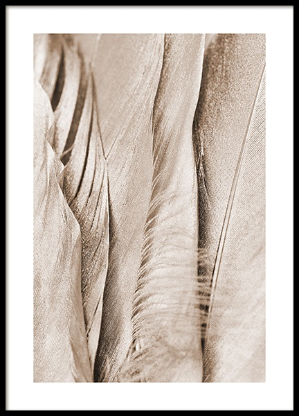 Shimmering Feathers Poster in the group Prints / Photographs at Desenio AB (13014)