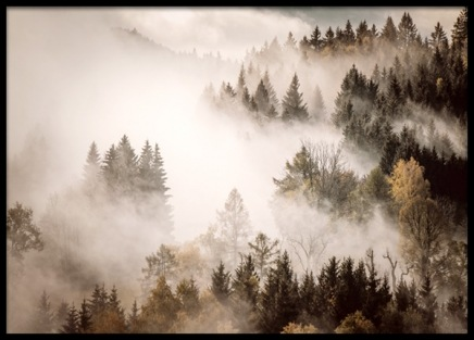Misty Autumn Forest Poster in the group Prints / Nature at Desenio AB (13195)
