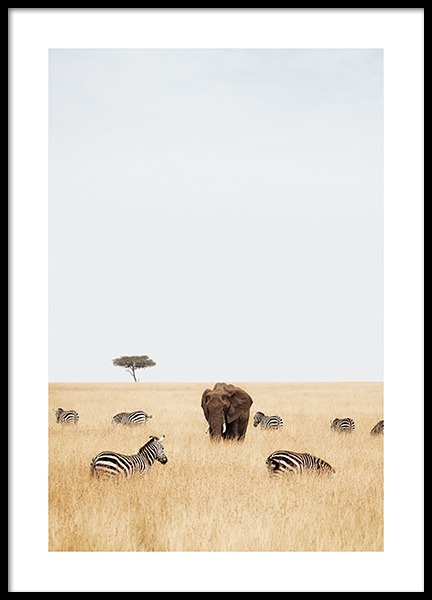 Elephant and Zebras Poster in the group Prints / Animals / Wild animals / Elephants at Desenio AB (14578)