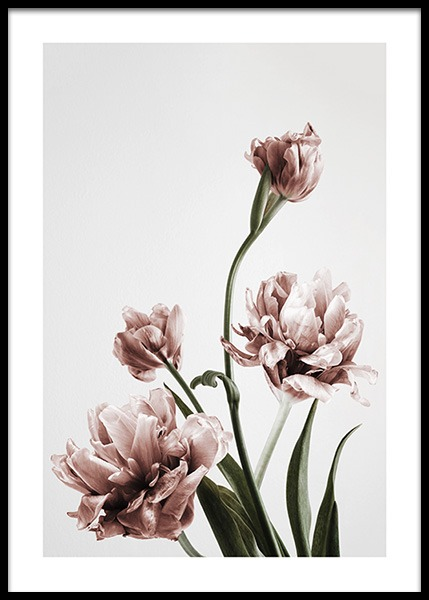 Pink Tulipe No3 Poster in the group Prints / Photographs at Desenio AB (2121)