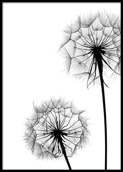 Dandelion No1 Poster in the group Prints / Black & white at Desenio AB (2392)
