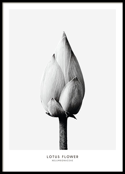 Botanical prints and black and white photo art, minimalist interior design