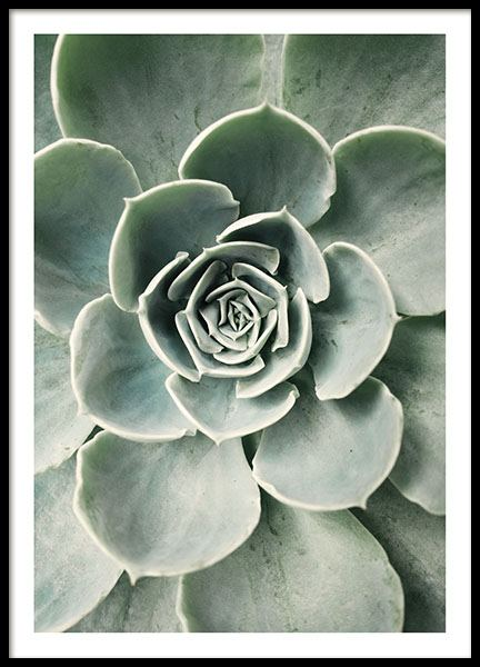 Cactus Flower, Poster in the group Prints / Floral at Desenio AB (8599)