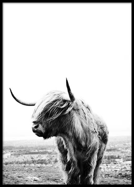 Highland Cow Poster in the group Prints / Animals at Desenio AB (8825)