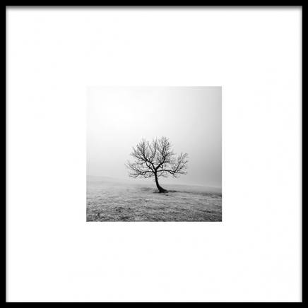Tree Poster in the group Prints / Photographs at Desenio AB (8953)