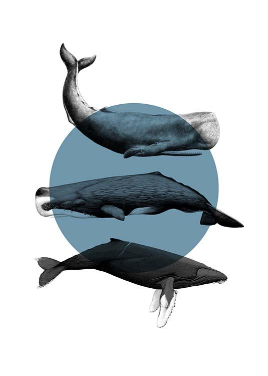 Whales Graphic Poster / Animals at Desenio AB (10033)