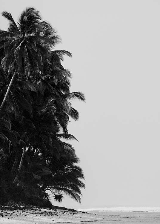 Palm Trees By Sea Poster / Black & white at Desenio AB (10235)