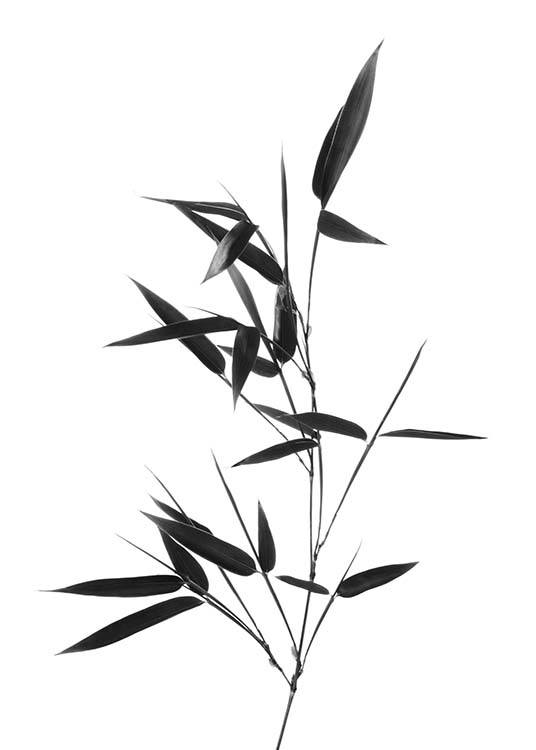 Bamboo Twig Poster / Black & white at Desenio AB (10390)
